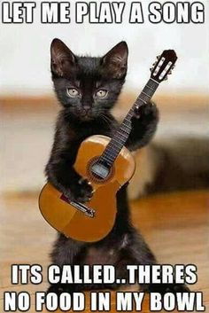 Nice song #funnycats #catmemes #funnymemes http://www.nojigoji.com.au/