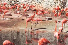 Xcaret - Playa del Carmen, Mexico Photographer: Wanderlust by Jona