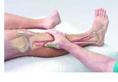 Basic Clinical Massage Therapy: Peroneus Longus by raquel