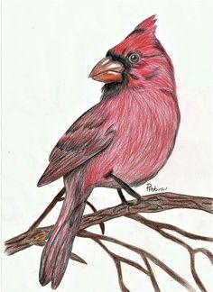Bird #red #bird #drawing