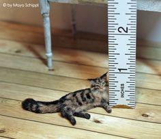 OOAK-1-12-Maine-Coon-Dollhouse-Miniature-Kitten-Cat-Handmade