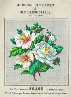 Rose of Sharon and Camelia