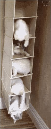 4gifs:  How to keep five kittens busy. The kitten condominium. [video]