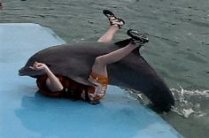 And, of course, anyone who has been violated by a dolphin: