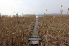 Balaton, Hungary, lake, beautiful, spring, tavel Photo: Annamaria Szauer