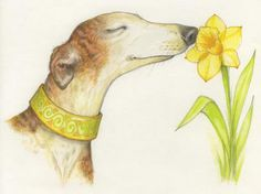 April is Adopt A Greyhound Month!!
