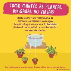 Eco Garden, Edible Garden, Grow Home, Plants Are Friends, Green Life, Plant Care, Survival Tips, Botany, Clean House