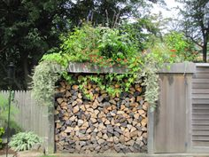 Wood shed with a green roof