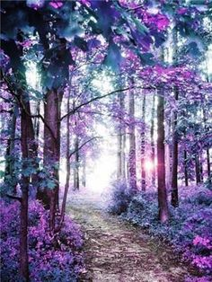 40 Fascinating Photographs Of Forest Paths To Another World Spannende Fotos von Waldwegen in die andere Welt Beautiful World, Beautiful Images, Beautiful Forest, Simply Beautiful, Forest Path, Magic Forest, Jolie Photo, Nature Pictures, Amazing Nature