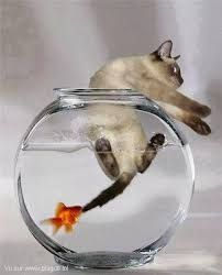 Who ever thought the fish would end up eating the cat? Well... apparently that just happened...