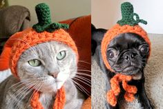 The cat and I are going as Pumpkin heads. Hey don't laugh. You might hurt our feelings. heehee