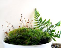 moss garden - beautiful  (from MissMossy on etsy)
