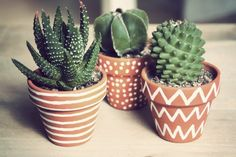 DIY gift Cactus pot painting for Mother's Day Cactus Pot, Cactus Plants, Painted Plant Pots, Ideias Diy, Easy Craft Projects, How To Make Tea, Clay Pots, House Plants, Flower Pots