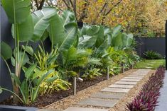Kihara Landscapes Premier Japanese Garden Landscaper Melbourne To be able to have a great Modern Garden Decoration, it is useful … Small Tropical Gardens, Tropical Garden Design, Backyard Garden Design, Garden Landscape Design, Poolside Landscape Ideas, Landscape Design Melbourne, Garden Pool, Patio Design, Garden Beds