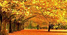 GoldenTour - Mùa thu - Mùa của lá vàng, Mùa của bầu trời trong veo cao xanh vời vợi, Mùa của những cái siết tay thật chặt trước những cơn gió heo may đến xao lòng. Thu đượm chút buồn nhưng lại mang trong mình vẻ đẹp đến lạ lùng. Mùa thu cũng là mùa đẹp nhất trong năm để bạn thực hiện một chuyến du lịch, cảm nhận cảnh sắc thiên nhiên diễm lệ của các nước trên thế giới. Hãy cùng GoldenTour trải nghiệm mùa thu vòng quanh thế giới qua những điểm đến thú vị rực rỡ sắc thu...