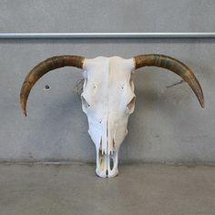 Old Cattle Skull – www.UrbanAmericana.com