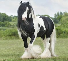 Most Beautifully Designed Horses in the World, Fun Horses, Beauty Hair Style Horses.