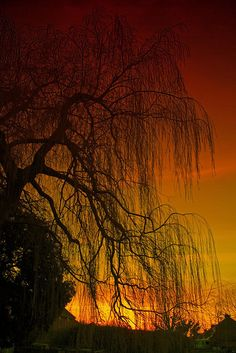 """""""Willow was a standard symbol for grief or deserted/unrequited love in Shakespeare's time."""""""