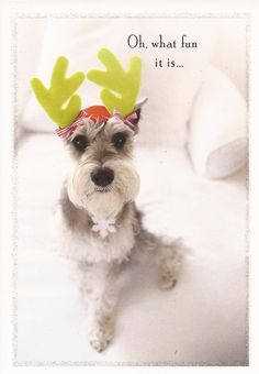 Merry Schnauzer - dressed up for the upcoming holidays!