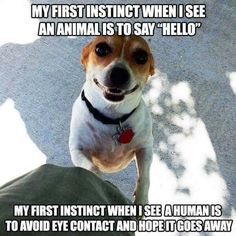 haha not really, but i do smile at dogs as if they are human. 0,0