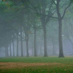 Misty morning on the quad.