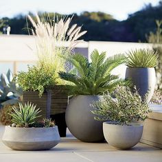 Container Gardening Ideas Container gardening pots - Create a gorgeous outdoor area with our container garden ideas. See the three essential elements for container gardening. Outdoor Planters, Garden Planters, Outdoor Gardens, Modern Gardens, Potted Garden, Concrete Planters, Rock Planters, Window Planters, Diy Planters