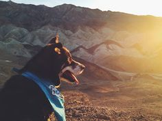 Taking Your Dog to Death Valley | Path & Paw