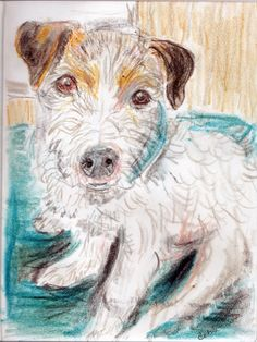 Hummer the Jack Russell Terrier  Deb Schneider Colored pencil