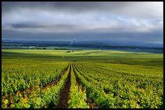 Top 10 des vins les plus chers du monde Champagne Region, Reims, France, Fields, Vineyard, To Go, Wine, Paris, Travel