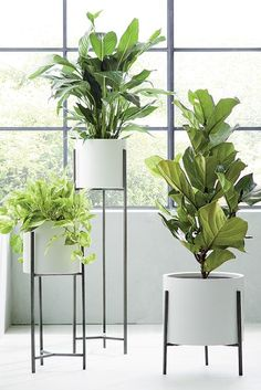 Dundee White Floor Planters at Crate and Barrel Canada. Discover unique furniture and decor from across the globe to create a look you love. Large Indoor Planters, Tall Indoor Plants, Tall Planters, White Planters, Outdoor Planters, Hanging Plants, Indoor Office Plants, Modern Planters, Tall Plant Stands