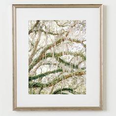 Charleston Spanish Moss Travel Fine Art FRAMED by SimpleLifePrint