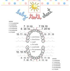 Baby Teeth Chart  It Included Links To Football Jerseys And High