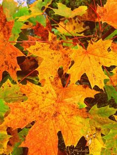 Fall #leaves are awesome :). Love that it's getting #cold!
