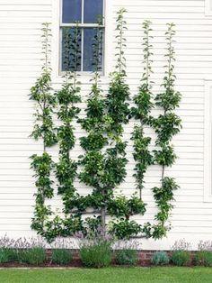 Tankar från Trädgårdsmästarn: Sommarbestyr för den händige