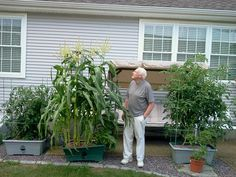 I'm submitting these for my Dad… I couldn't beat his corn and tomatoes this year!  - James C., Millbury, MA