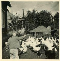 "Vintage Photo ""Feeding Chickens"", Photography, Paper Ephemera, Snapshot, Old Photo, Collectibles - 0138."