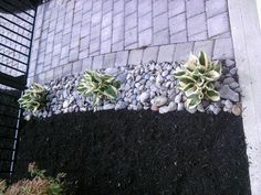 Use drought tolerant plants, river rock, and mulch. Easy to maintain and looks nice.