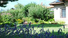 Perennial bed, contemporary garden/Évelő ágyás, kortárs kert Contemporary Garden, Perennials, Bed, Stream Bed, Beds, Perennial, Bedding