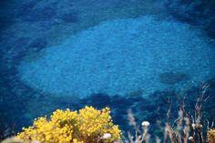 Il profumo dei fiori e l'odore del mare
