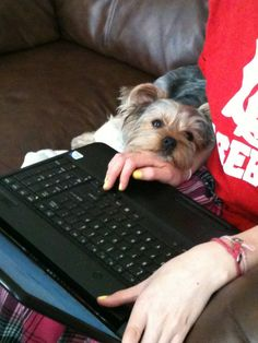 This represents our little dogs while we are pinning Yorkies on Pinterest. Hahaha