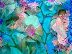 Aqua Orchid I Alaya Gadeh
