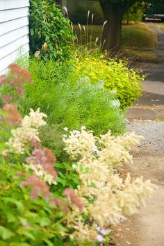 Eutrochium 'Little Joe', Persicaria polymorpha, Amsonia hubrichtii, Artemisia 'Powis Castle', Persicaria 'Lance Corporal' and Miscanthus purpurescens - Autumn 2011