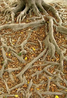 Tree roots - Chamelle Photography