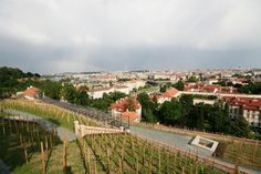 Prague Castle: The recently restored vineyard, on the site of the oldest vineyard in Bohemia (legend has it, established by Prince Wenceslas), is located above the Old Castle Stairs.