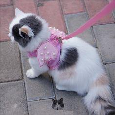 Aliexpress.com: Compre Colete de anjo Pet trelas arnês terno Pet colar do gato branco cinto de Pet gato filhote de cachorro coleiras para Cat Pet de confiança coleira de pérolas fornecedores em M&A Fashion