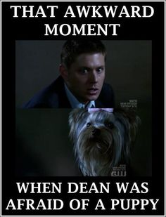 Dean Winchester, fearless against ghosts and demons, terrified of a dog Supernatural Funny Moments, Supernatural Fandom, Castiel, Winchester Supernatural, Sam And Dean Winchester, Winchester Brothers, Bitch, In This Moment, Avengers