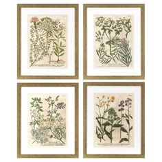 Decor Therapy Garden Flowers in Distressed Silver Frame - Set of 4 - 1606-8254LOW