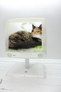 Upcycled Apple Computer Pet Bed  iMac  Cat Bed by AtomicAttic, $209.00