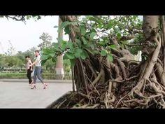 Tác phẩm tình nghệ sỹ, cây si thuộc cây cảnh bonsai Bonsai Art, World, Youtube, Plants, The World, Plant, Youtubers, Youtube Movies, Planets