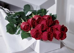 Order Red Roses - from McDonald's Flower Cart, your local Owen Sound florist. For fresh and fast flower delivery throughout Owen Sound, ON area. 12 Roses, Dozen Red Roses, Flower Cart, Flower Pots, Rose Color Meanings, Rosen Arrangements, Flowers For Valentines Day, Rose Gift, Love Is In The Air